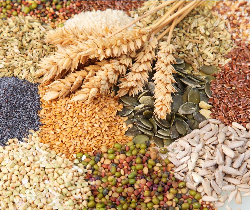 variációk gabonára